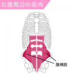ドローイン体幹を鍛えて胃酸の逆流しない体作りをしてみよう!